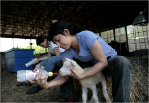 Farm interns as shown in NYTimes article.